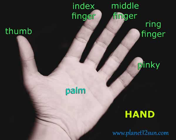 finger names