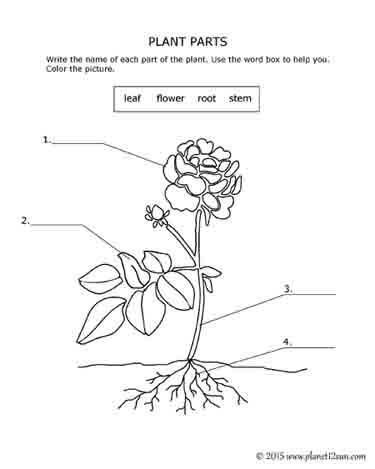 Flower Diagrams Printable | Printable Diagram